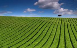 Green_Striped_Field-wide